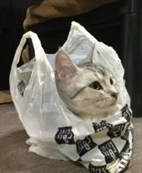 滝谷まき猫